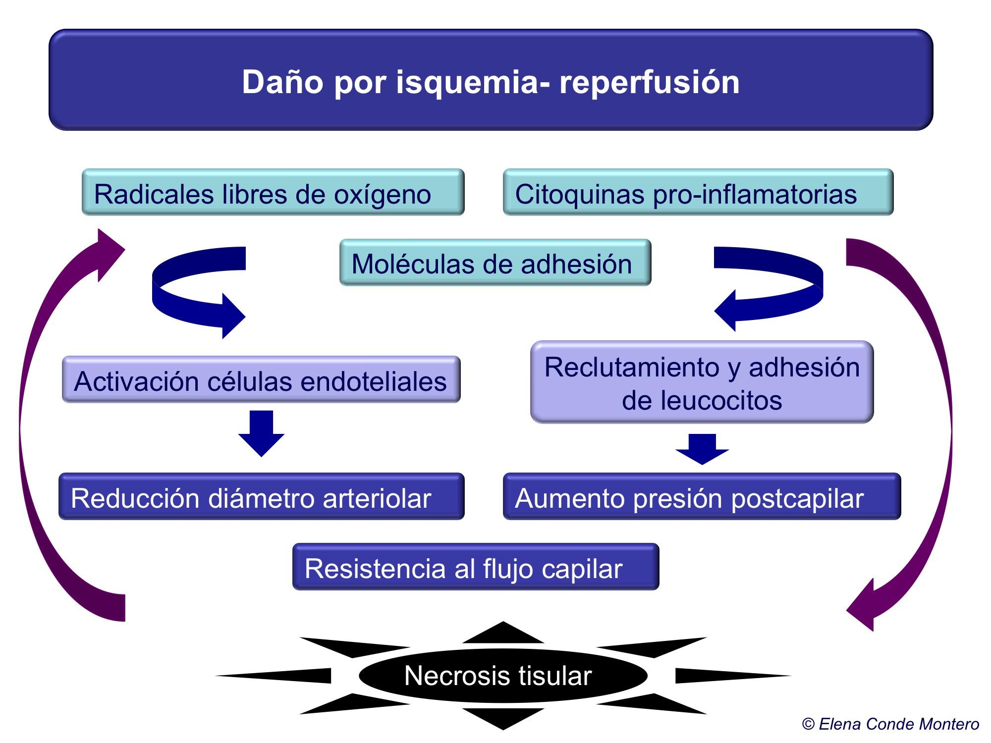 Esquema daño isquemia-repercusión